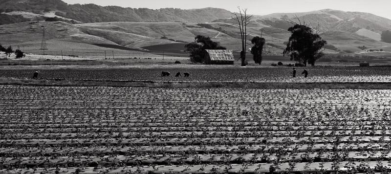 Los Osos Valley, California