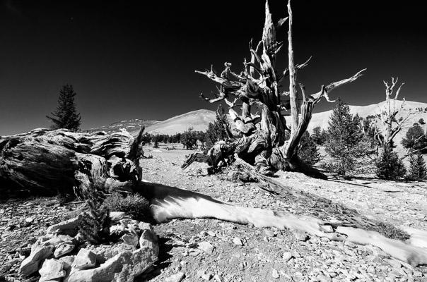 White Mountains, Nevada