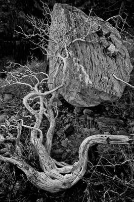 Sherman Pass, Sierra Nevada