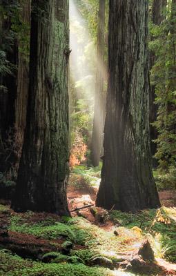 Montgomery Grove, Mendocino County, California