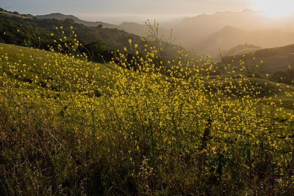 Santa Rosa Creek Road, California