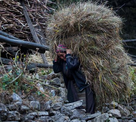 Women share more of the burden of harvest.